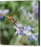 Dragonfly In The Lavender Garden Canvas Print by Rona Black
