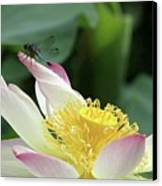 Dragonfly On Lotus Canvas Print by Sabrina L Ryan