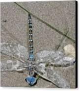 Dragonfly On The Beach Canvas Print