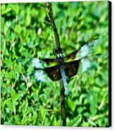 Dragonfly Resting On Stem Canvas Print