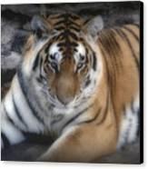 Dreamy Tiger Canvas Print by Sandy Keeton