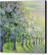 Dreamy Trees Canvas Print