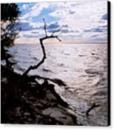 Driftwood Dragon-barnegat Bay Canvas Print