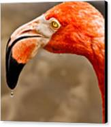 Dripping Flamingo Canvas Print