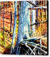 Dry Docked Canvas Print by Susie Weaver