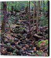 Dry River Bed- Autumn Canvas Print