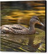 Duck Canvas Print by Atul Daimari