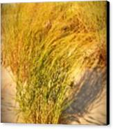 Dune Grass II  - Jersey Shore Canvas Print by Angie Tirado