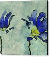 Duo Daisies - 02dp3b22 Canvas Print