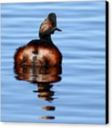 Eared Grebe Reflecting On Calm Water Canvas Print