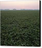 Early Morning Mist Over Soybean Fields Canvas Print by Brian Gordon Green