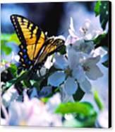 Eastern Tiger Swallowtail Canvas Print by Thomas R Fletcher