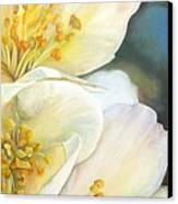 Eglantine Canvas Print