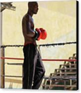 El Boxeador Canvas Print by Dawn Currie