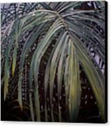 El Calor De La Selva Canvas Print