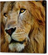 El Rey Canvas Print