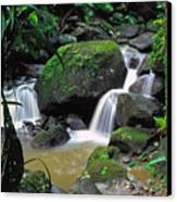 El Yunque National Forest Waterfall Canvas Print by Thomas R Fletcher