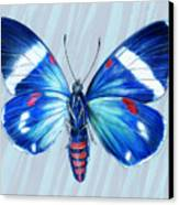 Electric Blue Moth Canvas Print