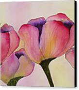 Elegant Tulips  Canvas Print