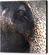 Elephant Canvas Print by Jane Rix