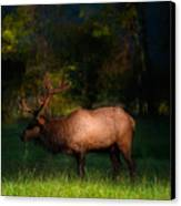 Elk In The Smokies. Canvas Print by Itai Minovitz
