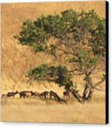 Elk Under Tree Canvas Print