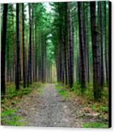 Emerald Forest Canvas Print