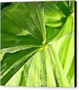 Emerging Plants Canvas Print