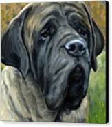 English Mastiff Black Face Canvas Print by Dottie Dracos