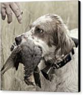 English Setter And Hungarian Partridge - D003092a Canvas Print by Daniel Dempster