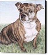 English Staffordshire Terrier Canvas Print