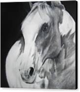 Equestrian Beauty Canvas Print