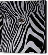 Equus Grevyi   Canvas Print