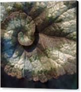 Escargot Begonia Canvas Print