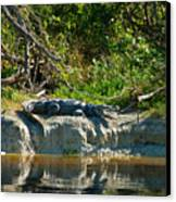 Everglades Crocodile Canvas Print