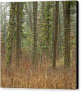 Evergreen Fog Canvas Print