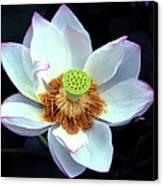 Exotic Lotus Canvas Print