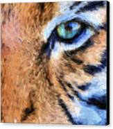 Eye Of The Tiger Canvas Print by JC Findley