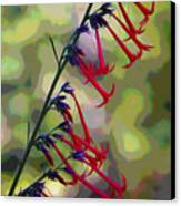 Fairy Trumpet Canvas Print