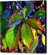 Fall Blackberry Canvas Print