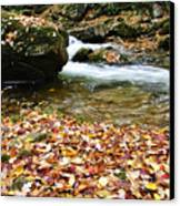 Fall Color Rushing Stream Canvas Print