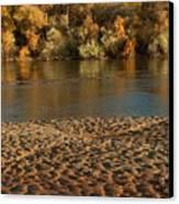 Fall Colors On The Rio Grande 1 Canvas Print