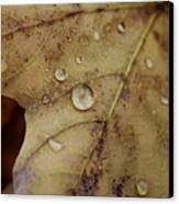 Fall Droplets Canvas Print