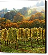 Fall In The Red Hills Of Dundee Canvas Print