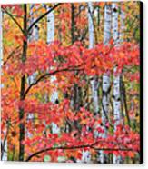 Fall Layers Canvas Print