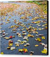 Fall Leaves Canvas Print by Michael Tesar