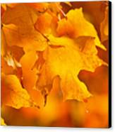 Fall Maple Leaves Canvas Print by Elena Elisseeva