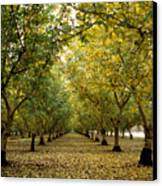 Fall Orchard Canvas Print by Kathy Yates