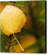 Fall Raindrops Canvas Print