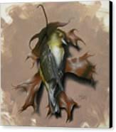 Fallen Finch Canvas Print by Timothy Jones